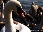 http://images13.fotosik.pl/106/a3114692f19e1d7cm.jpg