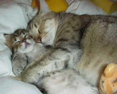 śpiące kotki