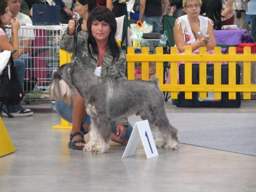 Gateway Enter Gagatek, CAC, CACIB, BOB, Crufts qualification