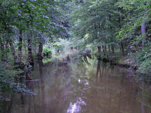 rzeka, woda, krajobraz, natura, przyroda, las, #rzeka #woda #krajobraz #natura #przyroda #las