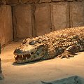 krokodyl #krokodyl #zoo